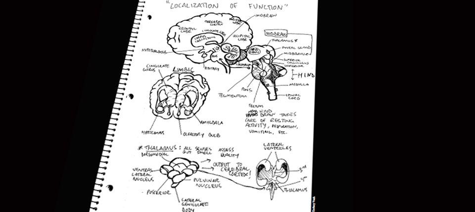 Ostéopathie et recherche côte à côte