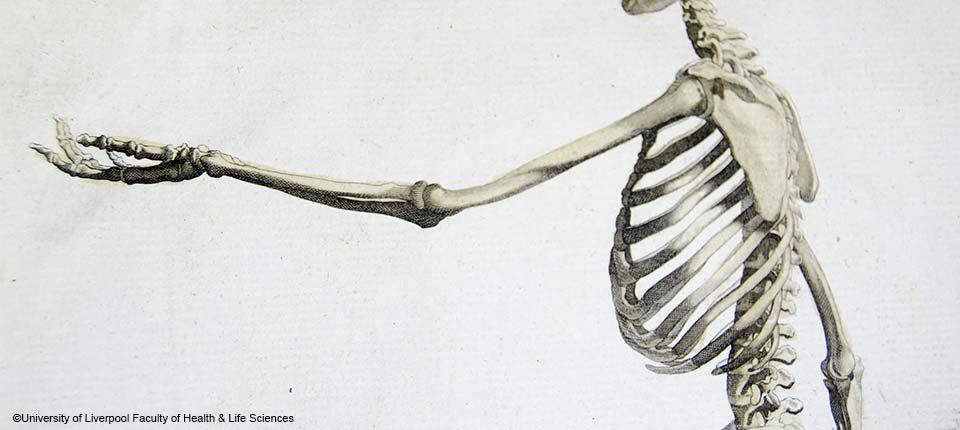 ostéoporose postménopausique