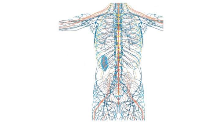 Innervation du fascia thoraco-lombaire une preuve qui fait mal !