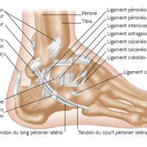 15. Les blessures dans le sport : la cheville - OSTÉOMAG ...