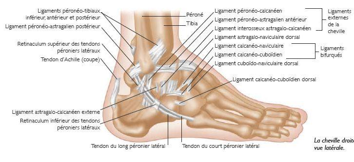 15. Les blessures dans le sport : la cheville