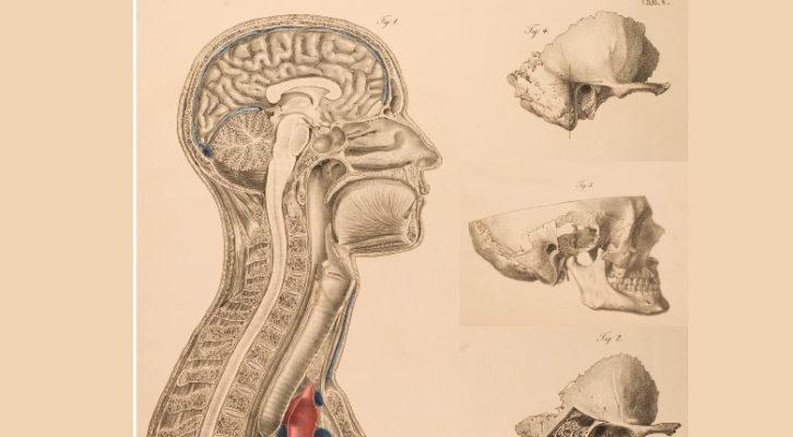 Physiopathologie de la mastication l'ostéopathie doit mettre les bouchées doubles