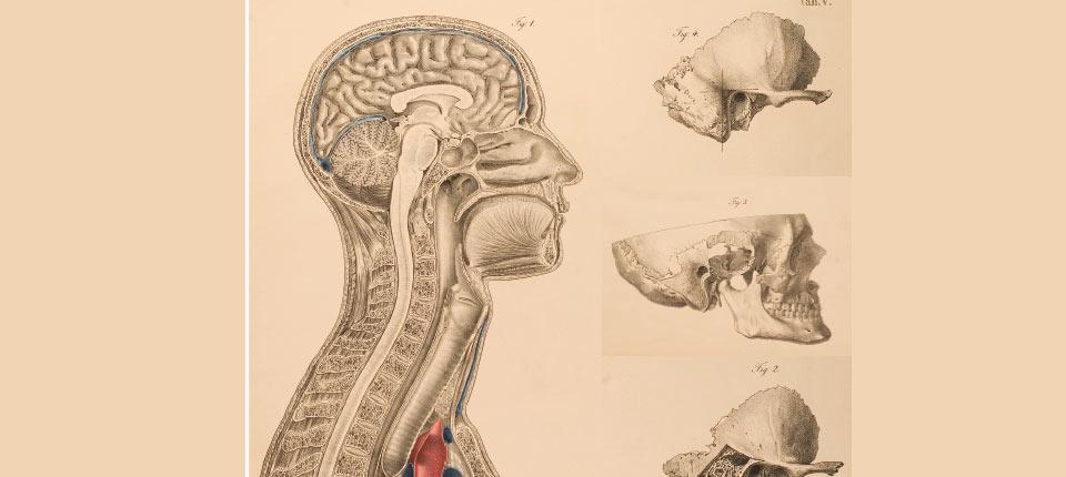 Physiologie-de-la-mastication_osteomag28