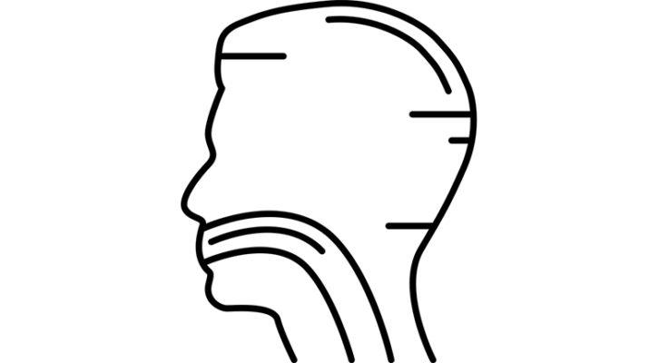 L'os hyoïde : important pour l'équilibre