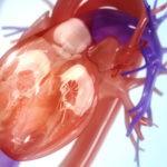 Réduire les risques de maladies cardiovasculaires : une p'tite dose de sport suffit. Dites-le à vos patients !
