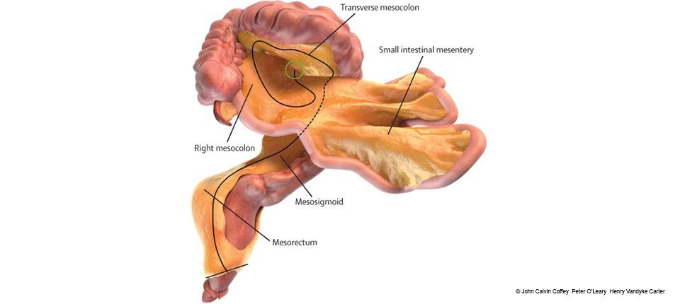 representation-numerique-du-petit-intestin-du-gros-intestin-et-du-mesentere_-john-calvin-coffey-peter-oleary-henry-vandyke-carter-jpg_osteomag