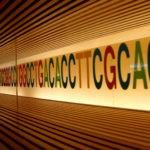 Nous sommes plus que notre ADN : découverte d'un nouveau mécanisme d'hérédité épigénétique