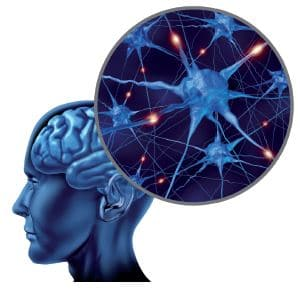 empathie neurones