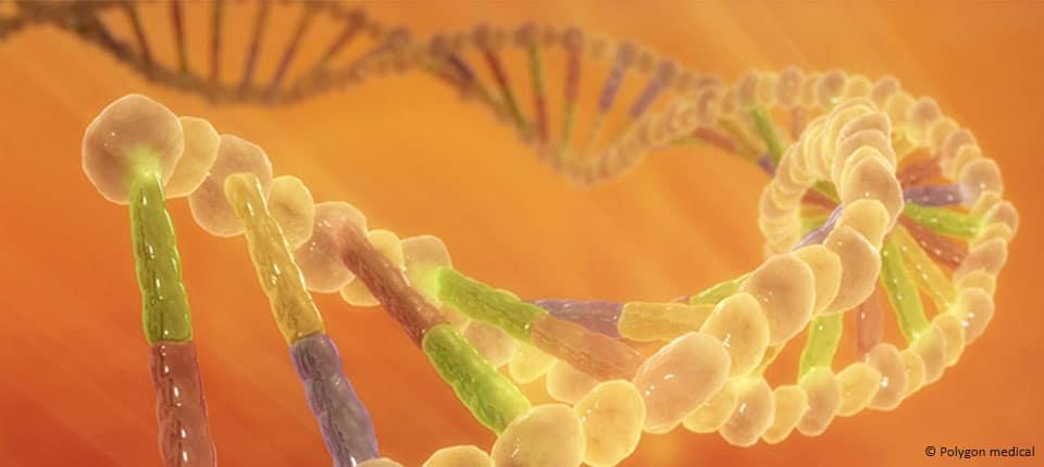 Crises d'asthme : un lien direct entre génétique et environnement
