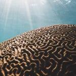 Des synapses du système de la récompense à l'origine de troubles autistiques