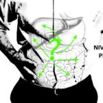 Recherches en ostéopathie: ça gargouille encore?