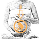 Thymus, thymus, thymus… un organe important pour une grossesse sereine ?