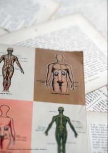 Un-nouveau-modèle-ostéopathique-de-traitement-viscéral