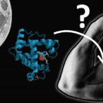 Protéines + Sommeil, un duo gagnant pour les muscles