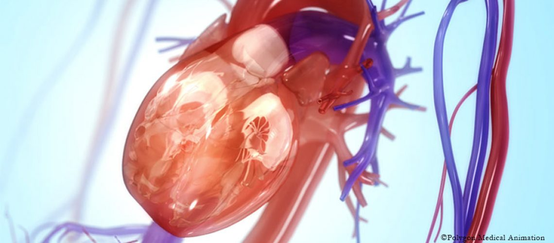cardio-vasculaire_osteomag