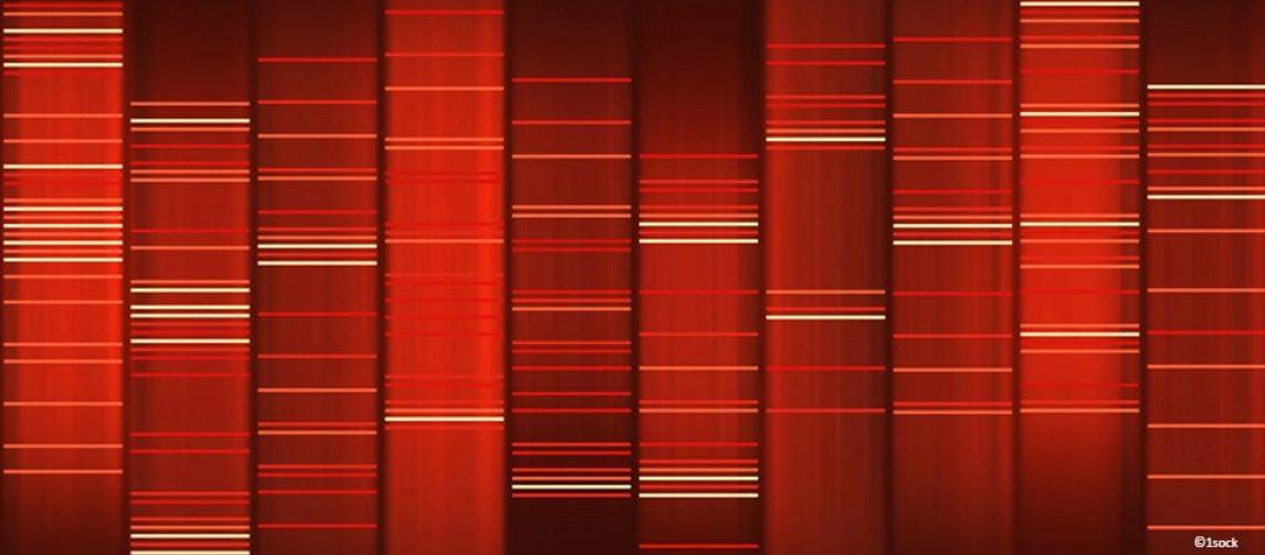 polymorphisme-genetique
